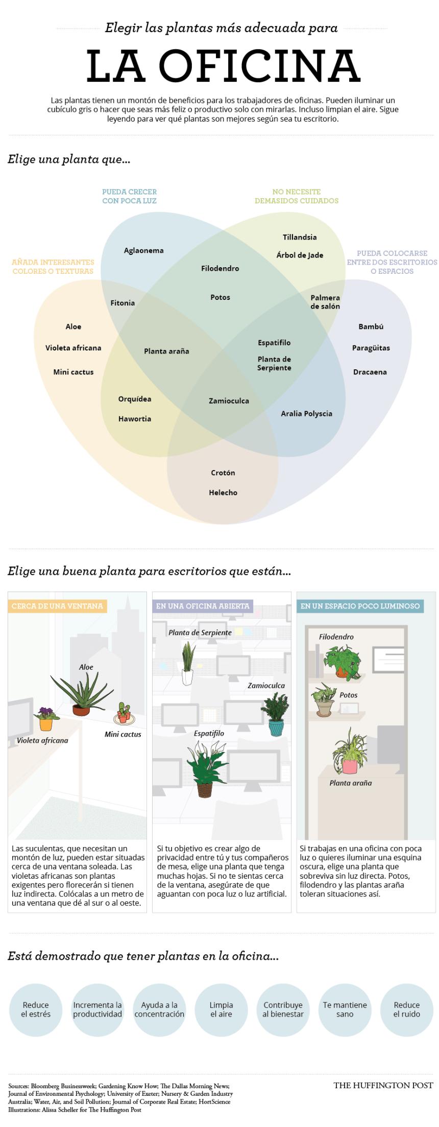 Las plantas más adecuadas para tu oficina